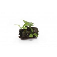 Beeztees Boomstronk+Planten - Aquariumdecoratie - Polyresin 14 X